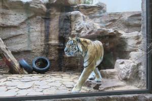 Keine Angst vor großen Tieren