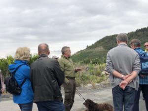 Ausblick auf den Schwarzkiefernbestand am Schwanberg